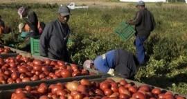 """Sosteniamo le lotte e l'autorganizzazione dei braccianti contro il """"sistema"""" agroalimentare"""