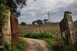 Dietro allo sdegno per il caporalato c'è il vero problema: il sistema di produzione capitalistica agroalimentare